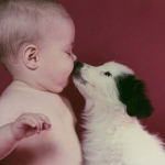 babies and puppies 13