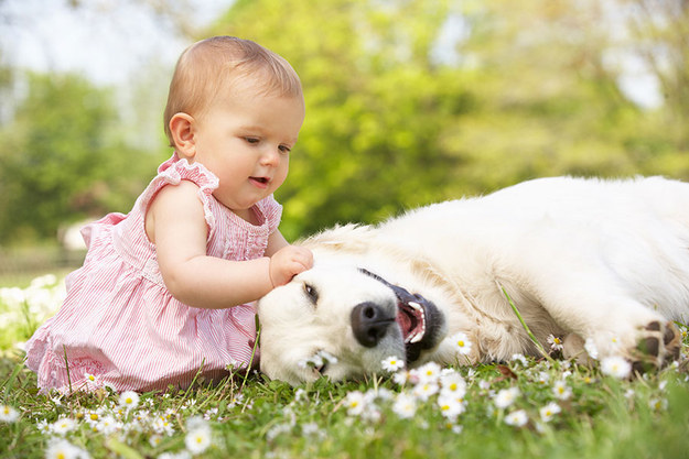 babies and puppies 7